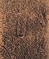 Negro Cobre
